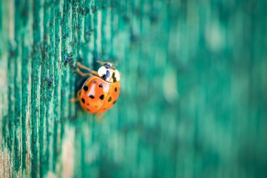 Ladybug on wooden green background
